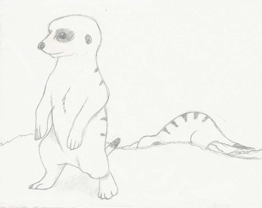 Drawings Meerkats Google Search Drawings Meerkat Art Drawings