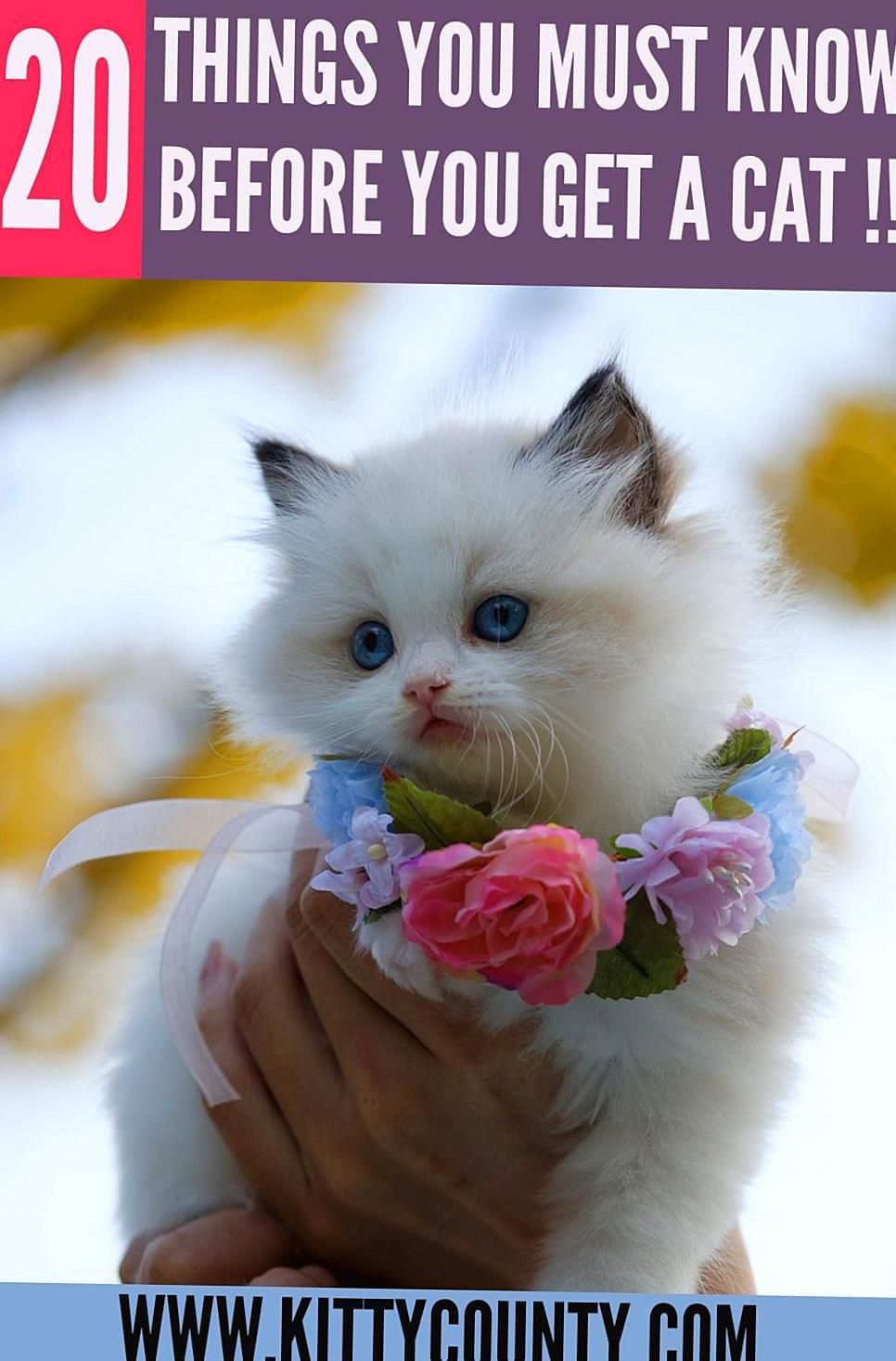 Bringing A Cuddly Cute And Purring Bundle Of Joy Is Exciting This Kitten Is The First One Or An Addition To The Paw Army You In 2020 Kitten Care Cat