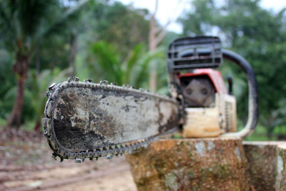 tree stump removal in 2020 Tree stump, Chainsaw, Stump