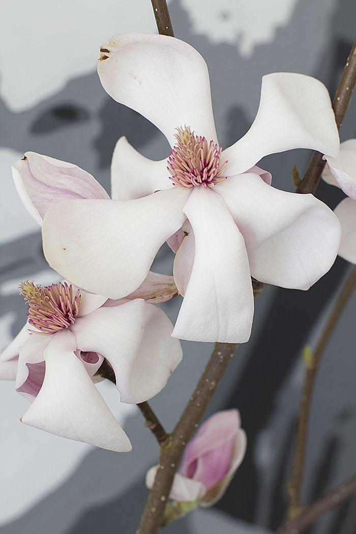 Bambula: Magnolia makuuhuoneessa