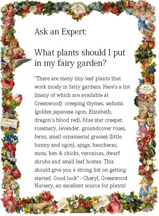 What Plants Should I Put In My Fairy Garden Cheryl From Greenwood Nursery Was So Nice As To