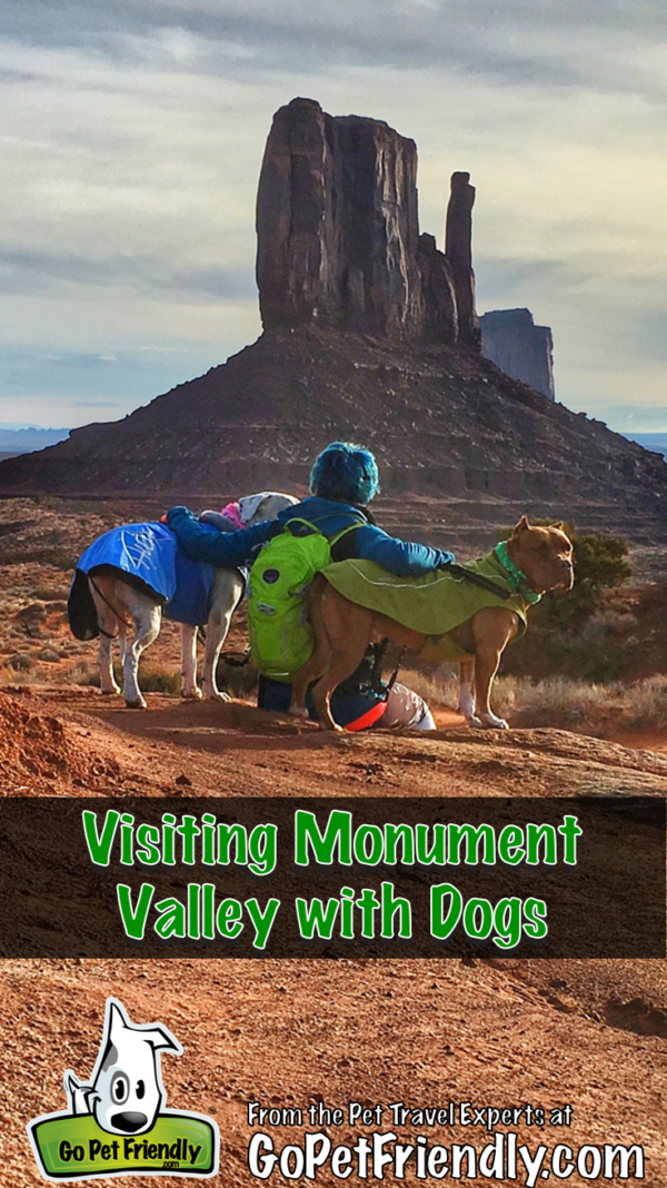Traveling & Camping With Pets (Dogs, Cats, & Donkeys)