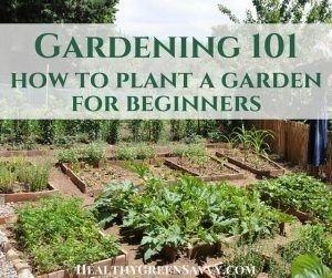 # Anfänger #anlegt #einen # für #Garten # Gärtnern   – dekoration