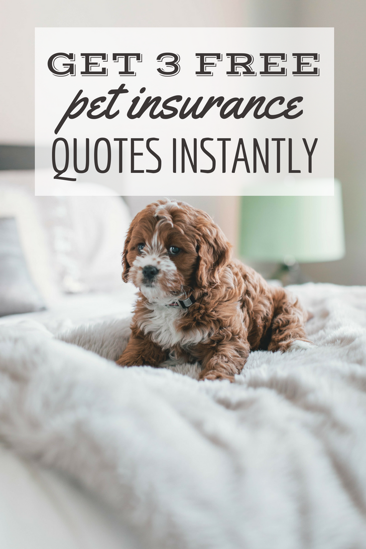 Pet Insurance Quotes Compare Different Breeds And Ages Pet