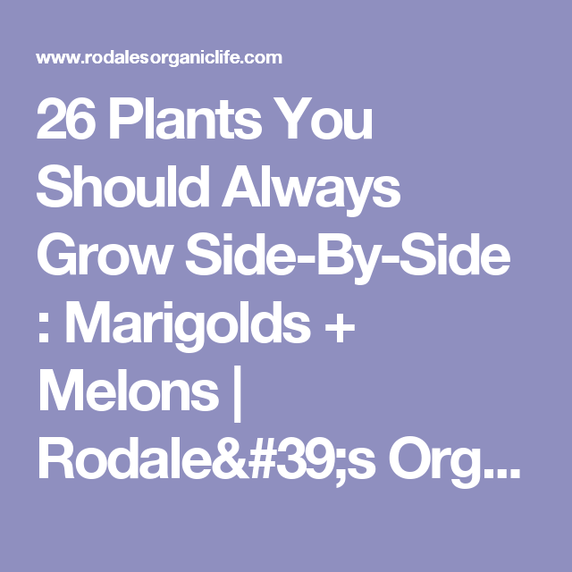 26 Plants You Should Always Grow Side-By-Side : Marigolds + Melons | Rodale's Organic Life