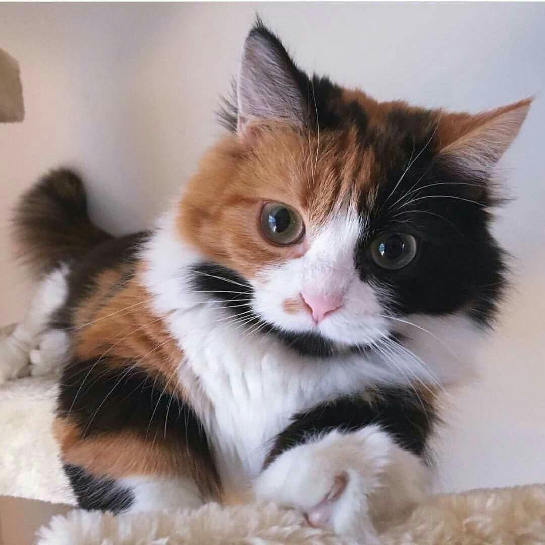 Hai Handsome Cute Cats Kittens Cutest Cute Cats Kittens