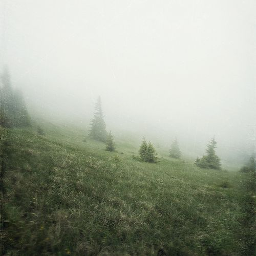 Creeping in the fog