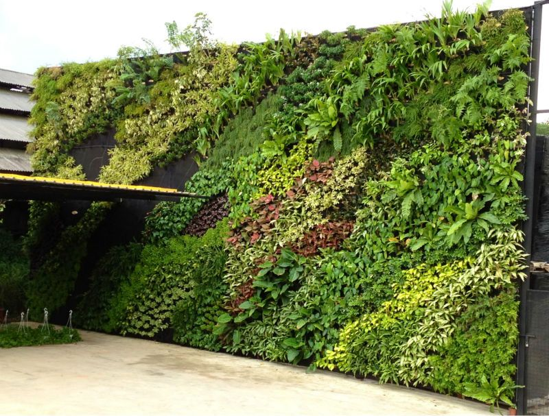 Fake Wall Hang Plant Green Wall For Outdoor Or Indoor Decor   Buy Artificial  Plant Wall,Greenery Wall,Artificial Wall Hang Product On Alibaba.com