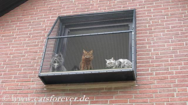 fensterk fig f r katzen der katzenbalkon oder fenstervoliere genannt ist der fensterplatz f r. Black Bedroom Furniture Sets. Home Design Ideas