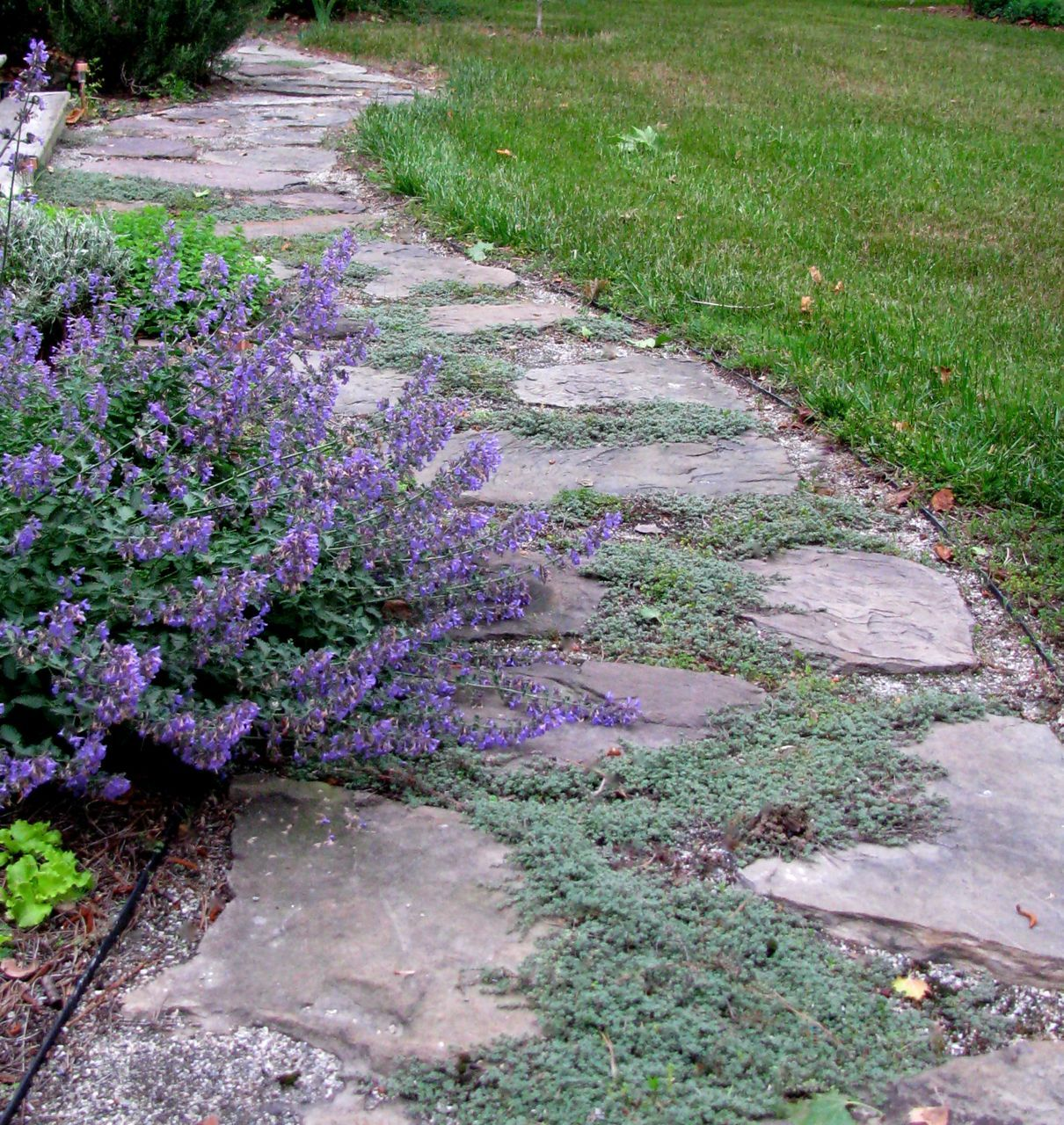 17 Best 1000 images about garden pathway between houses on Pinterest