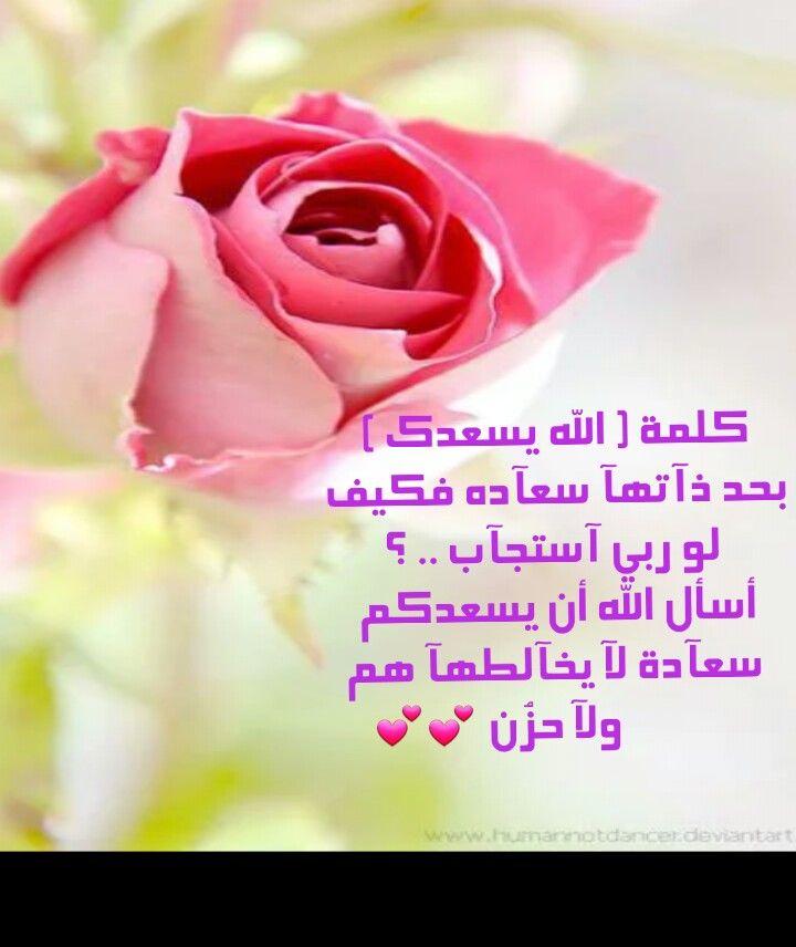 الله يسعدك Rose Flowers Plants