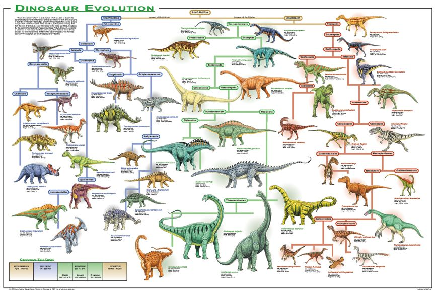 Evolution Chart Of Vertebrate Dinosaurs Fish
