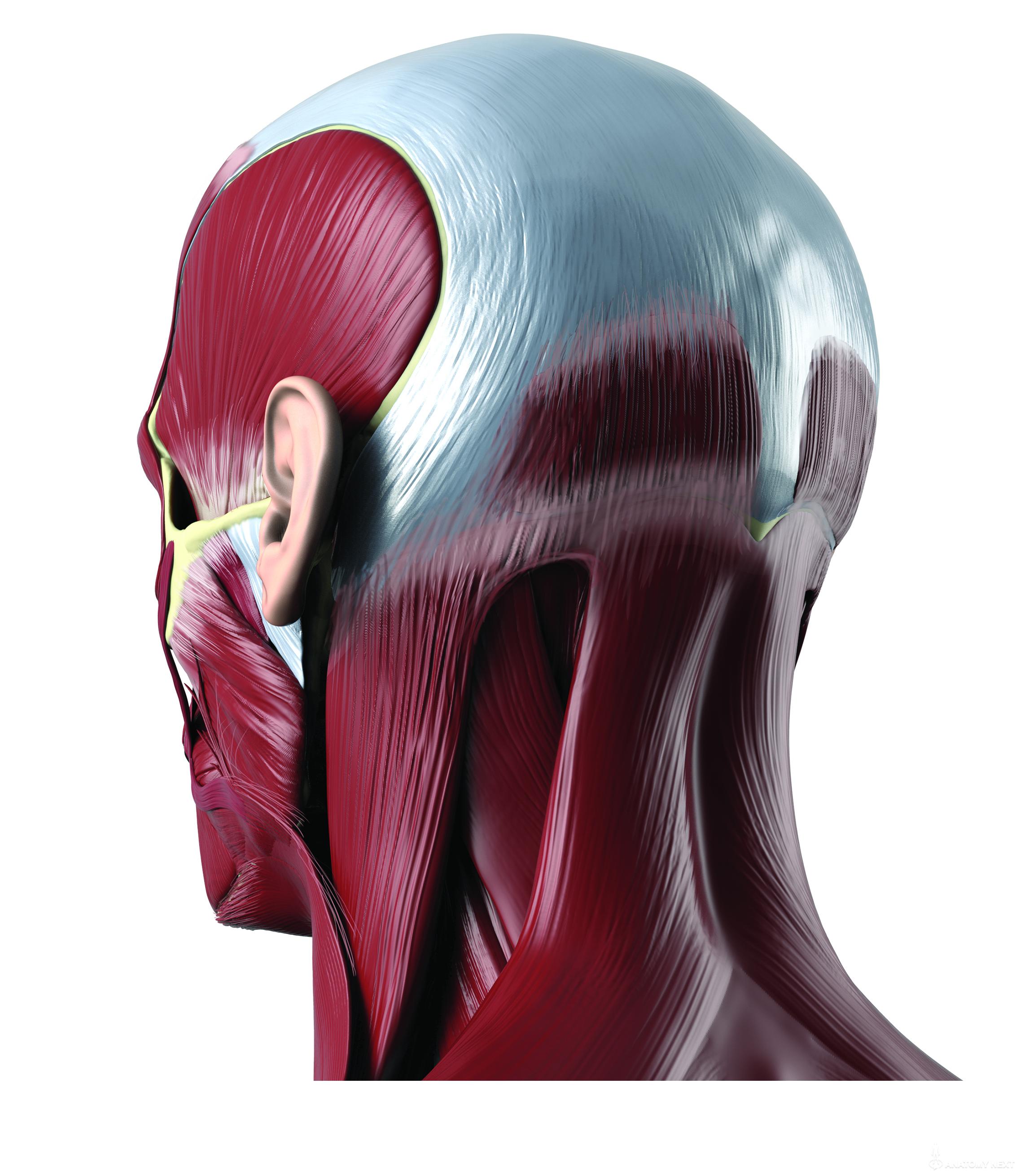 Anatomy Next