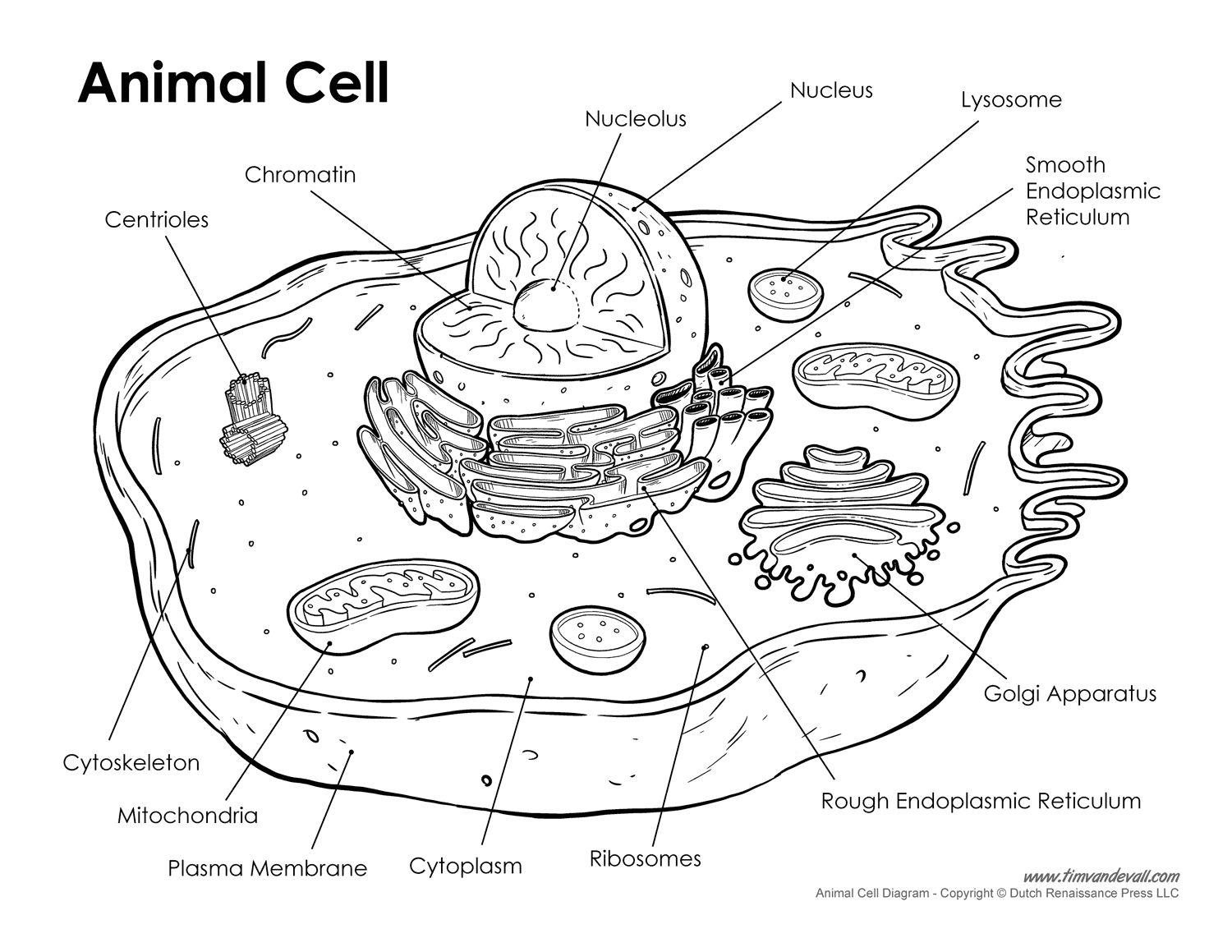 Animal Cell Sketch Animal Cell Drawing Labeled