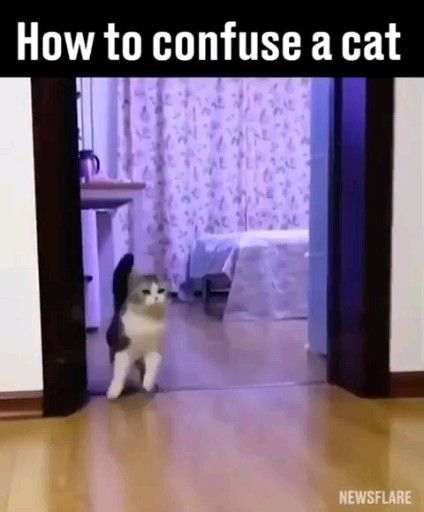 How to confuse a cat 😹😹 . . .  #catsofig #kitty #catsofinsta #catslover #instacats #catsofinstagram #kitten #cats #catlady #catlover #catsagram #catholic #instacat #cat #catphoto #catsforever #catstuff #catsygram