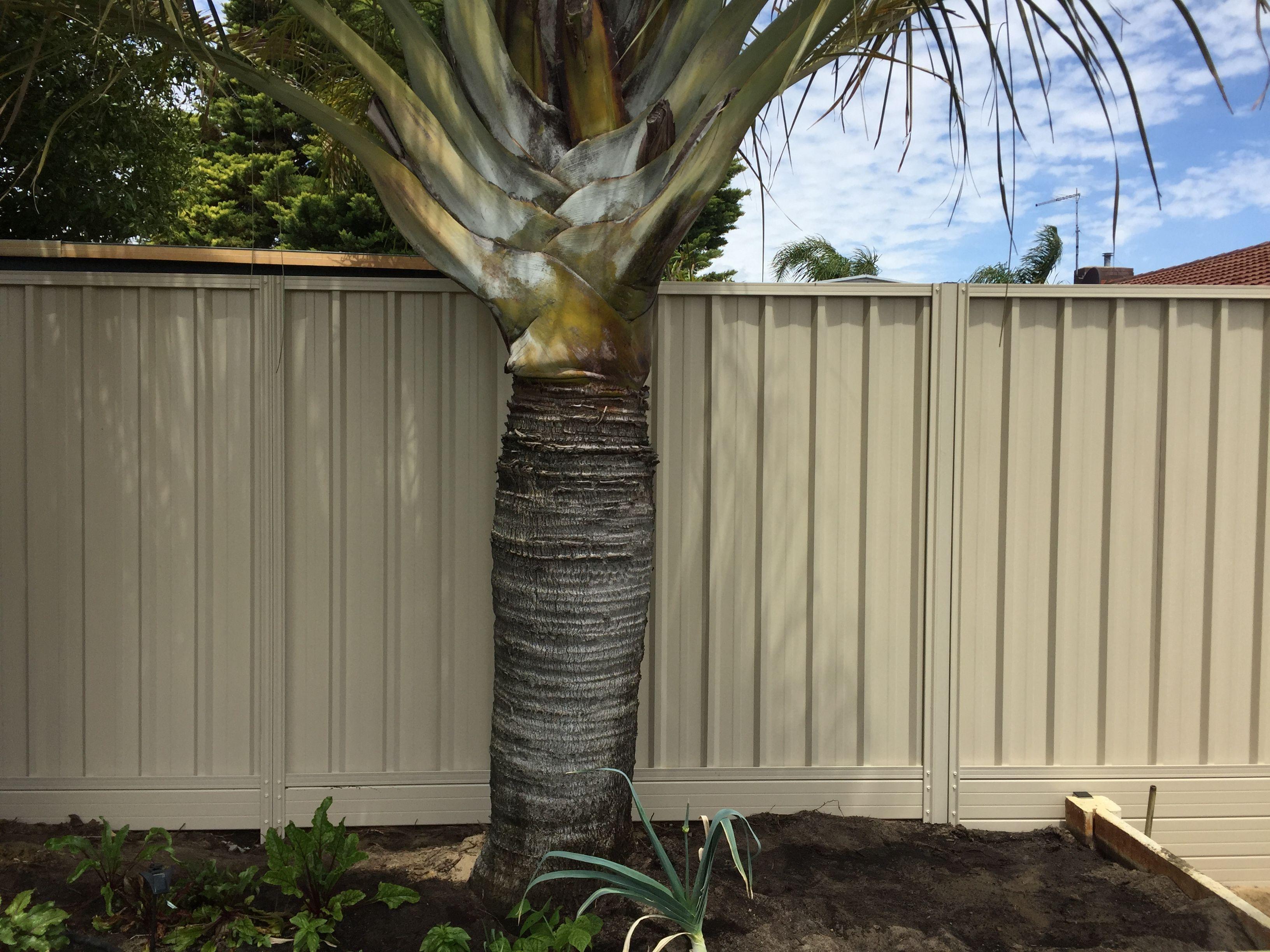 COLORBOND® Steel Fencing Contractors Perth WA | Colorbond