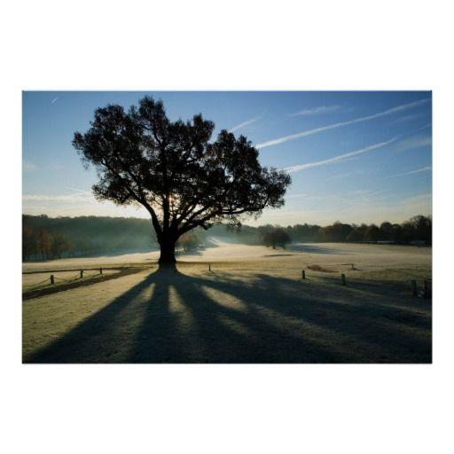 Turkey Oak in Autumn Print