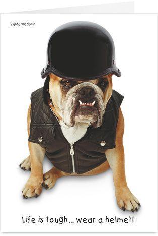Awesome Bulldog True Story Diesel The Bulldog English