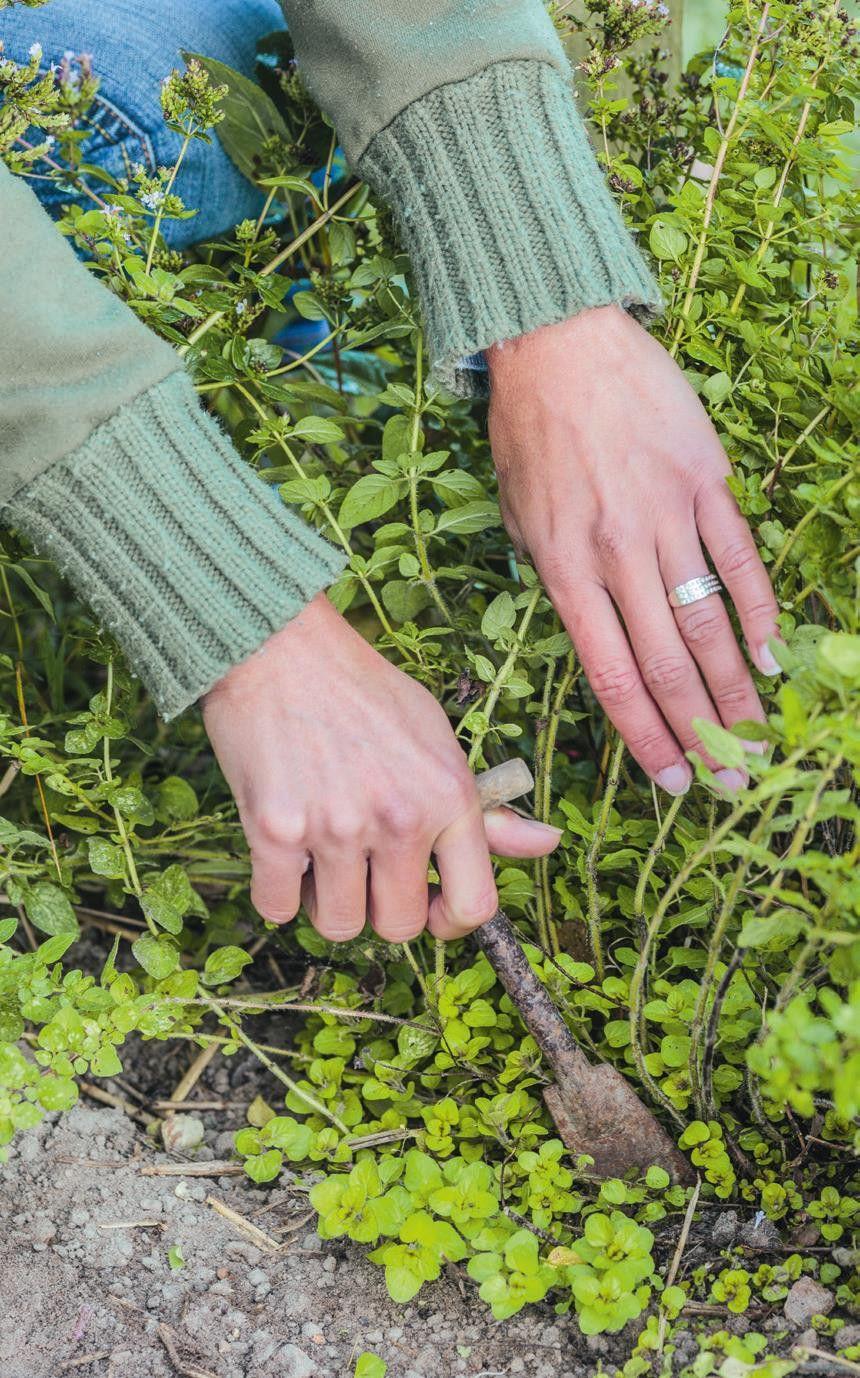 Que Faire Dans Le Potager En Fevrier jardin : que faire au potager en février ? | potager