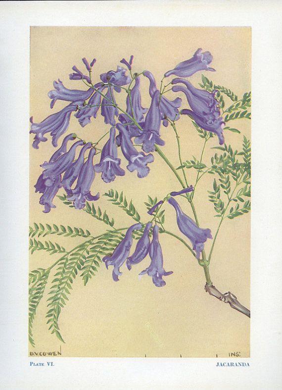 SUNO Summer: Jacaranda Vintage Flower Plate