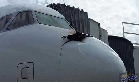 طائرة ركاب تابعة لخطوط لوفتهانزا تهبط اضطراريًا…: طائرة ركاب تابعة لخطوط لوفتهانزا تهبط اضطراريًا بعدما اصطدم نسر ضخم بمقدمتها محدثًا…