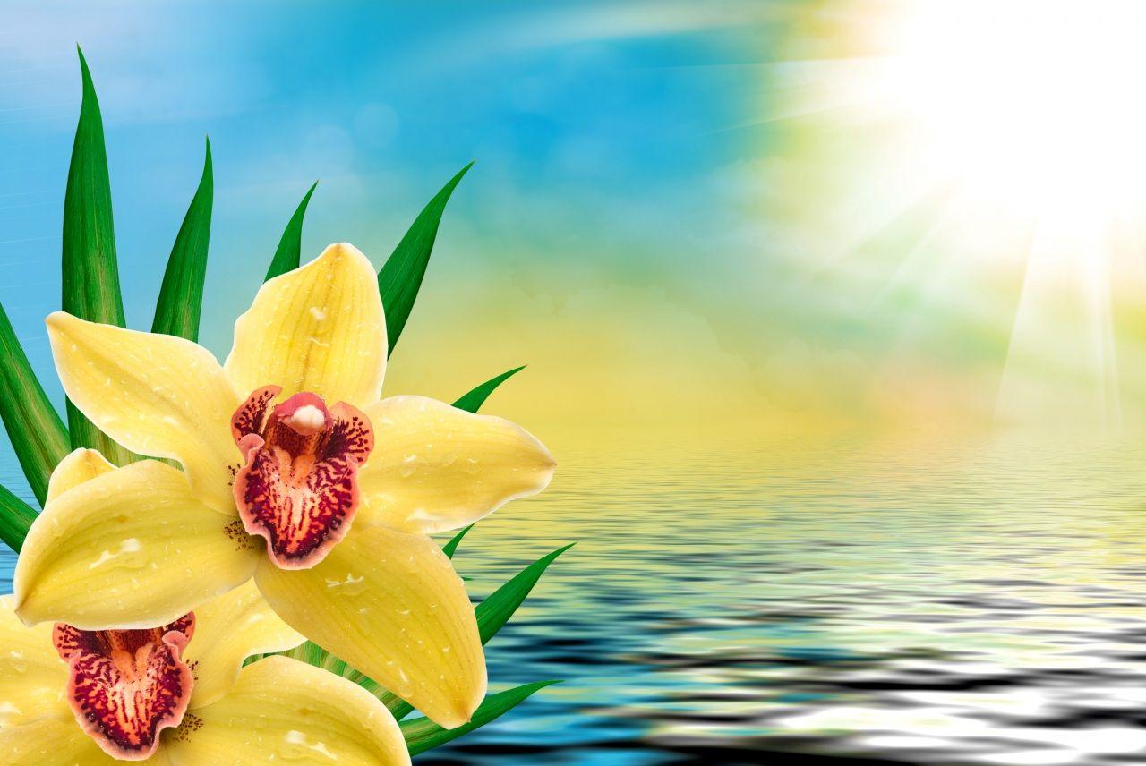 Orchid_Water_Yellow_501517.jpg (imagem JPEG, 1280 × 856 pixels) - Redimensionada (71%)