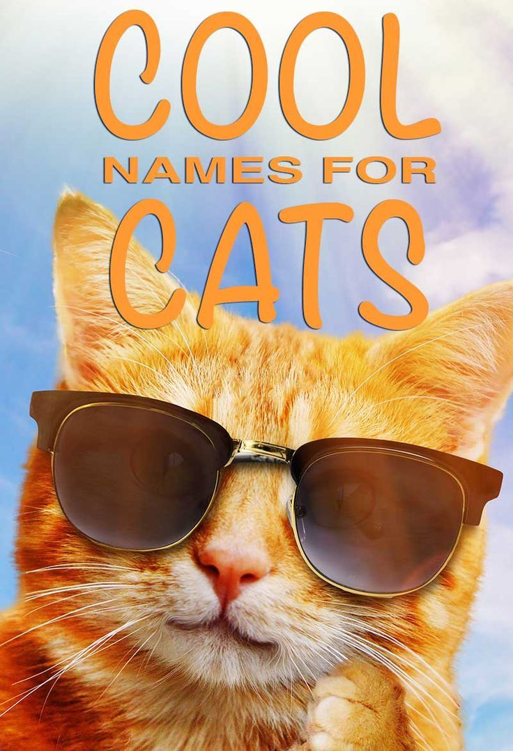 Cool Names For Cats 300 Ideas For Cool Cat Names Funny