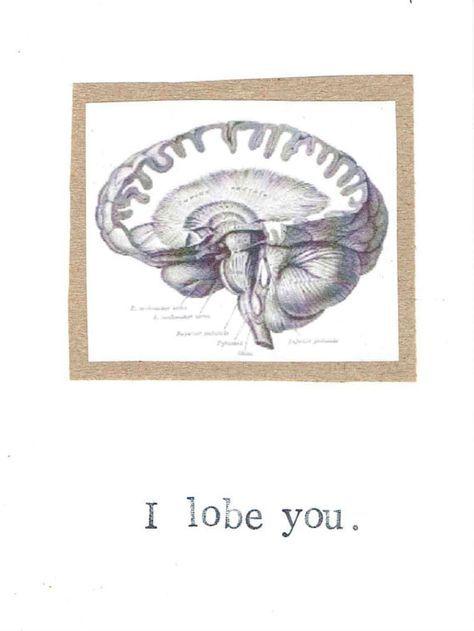 I Lobe You Card   Funny Brain Anatomy Science Pun Nerdy Geeky ...