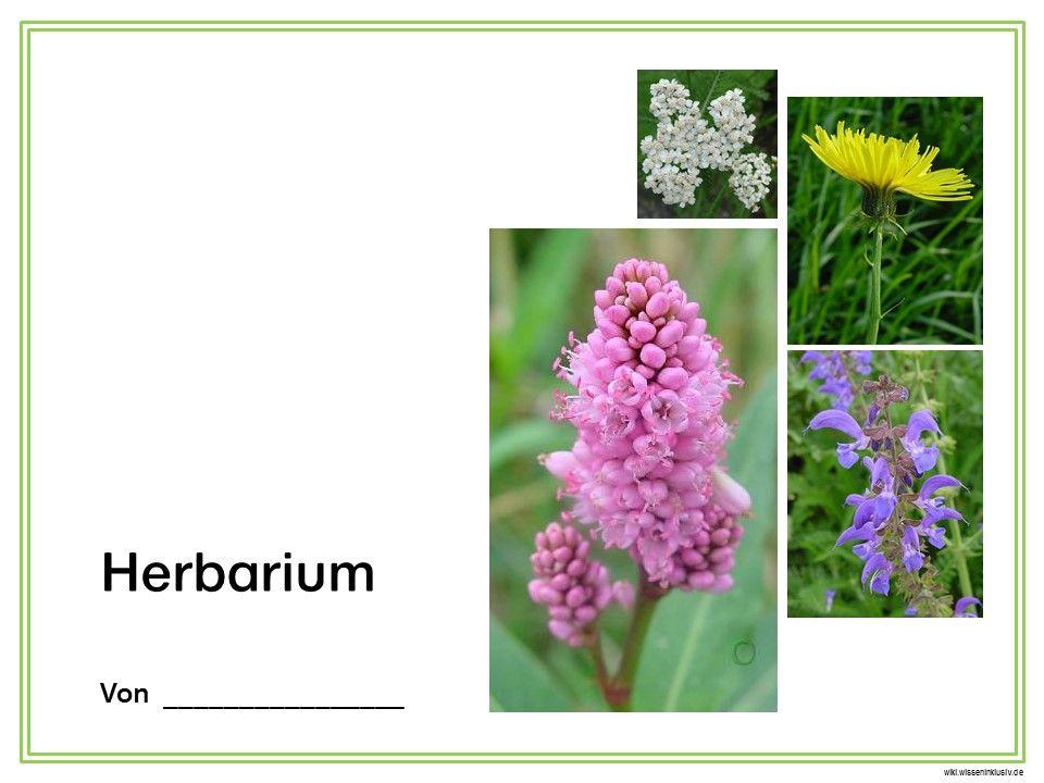 Herbarium Deckblatt 1 | Deckblatt, Decken