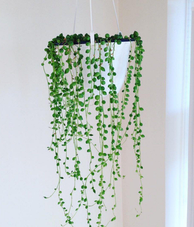 7 Pflanzen für alle, die keinen grünen Daumen haben