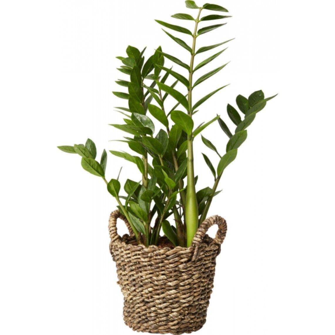 gröna växter för mörka rum