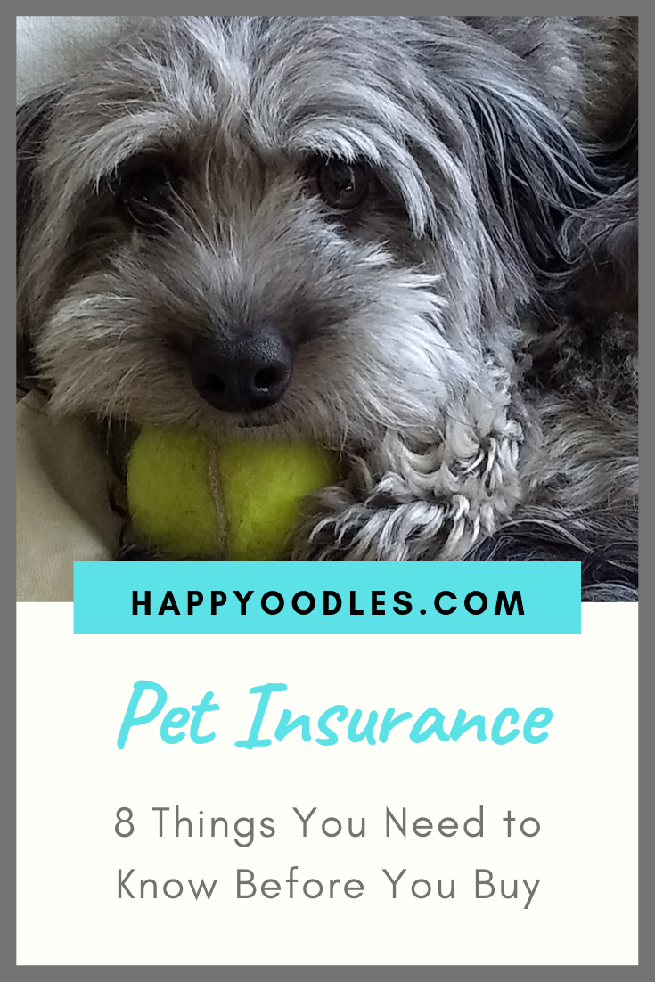 Pet Insurance 8 Things You Should Know Puppy Socialization