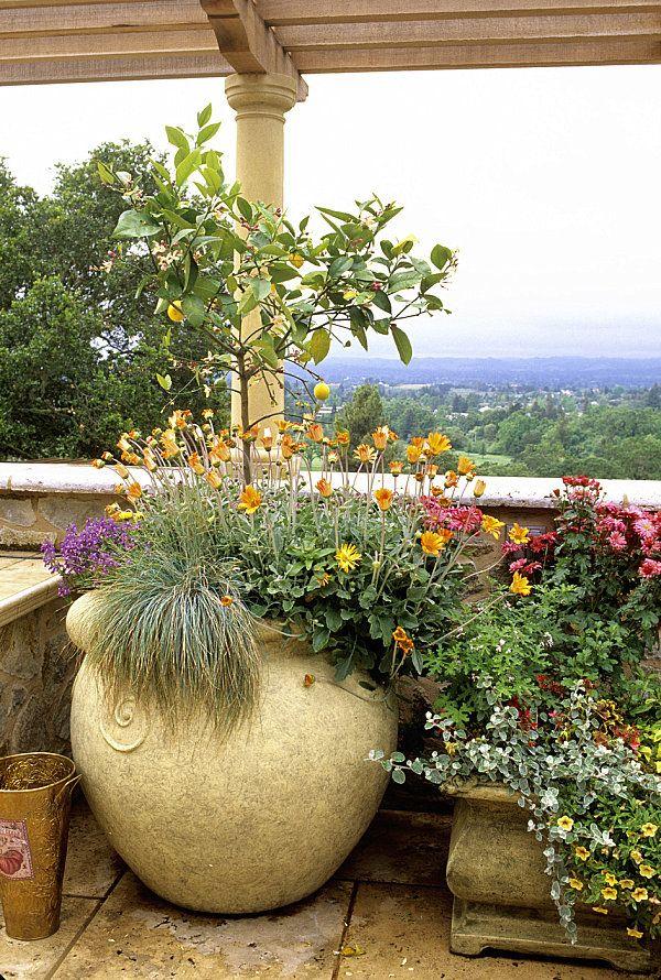 terrassengestaltung mit pflanzen wertvolle ratschl ge und beispiele wohnideen garten. Black Bedroom Furniture Sets. Home Design Ideas