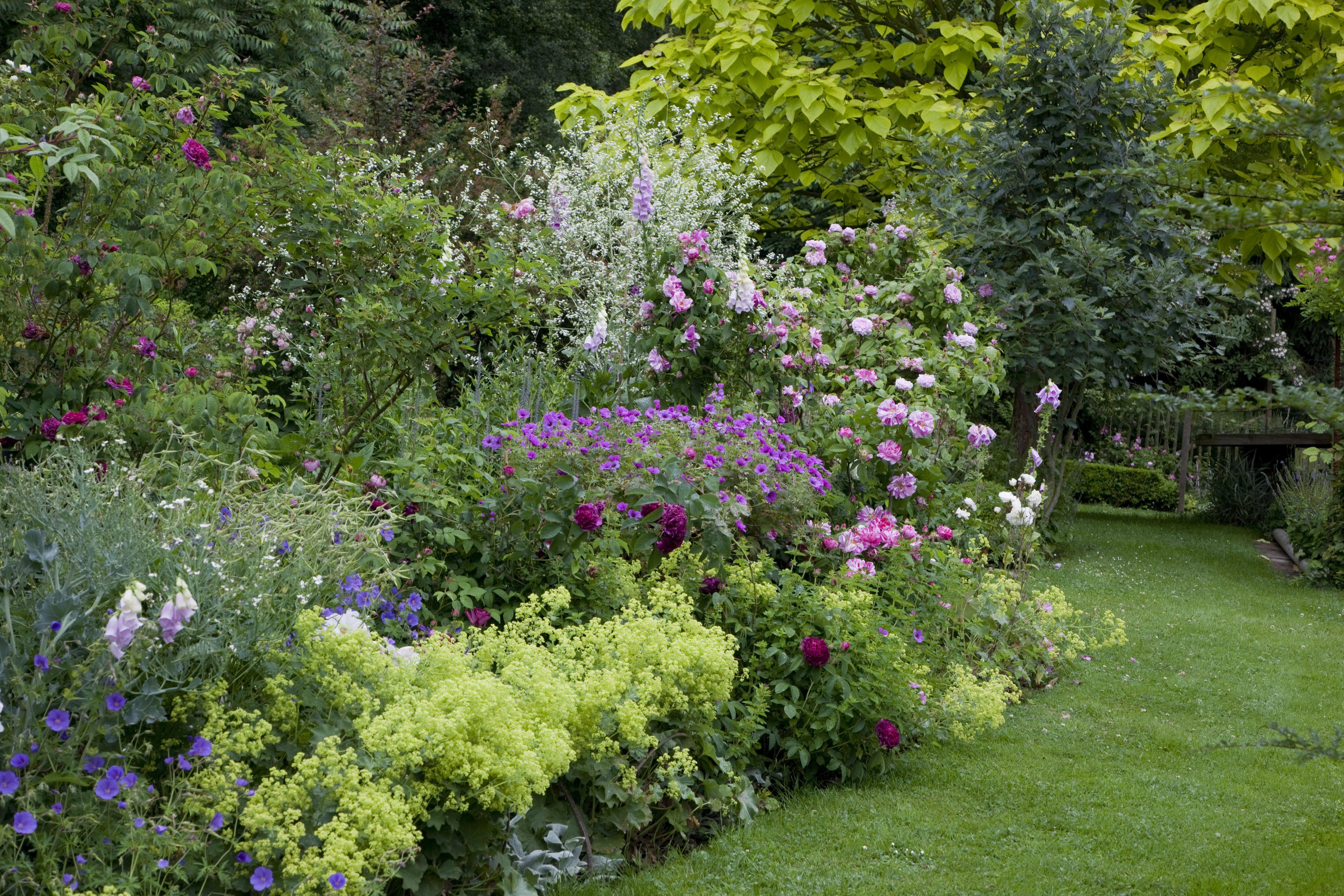 5 vivaces couvre sols longue floraison qu 39 il faut avoir cultiver son jardin pinterest. Black Bedroom Furniture Sets. Home Design Ideas