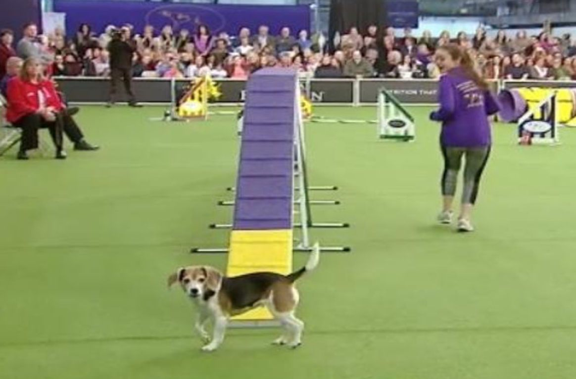 Here S The Best In Show And All The Winners From Day Four Of