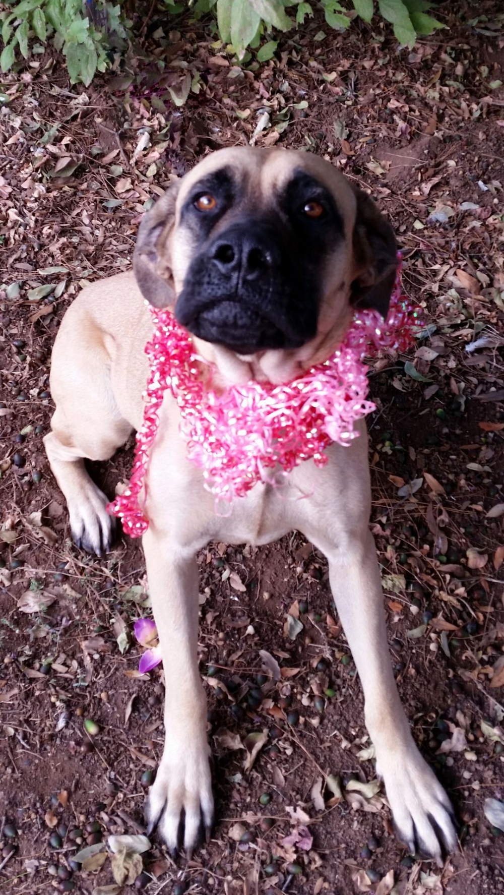 Adopt Lizzie On Dog Adoption Help Homeless Pets Homeless Pets