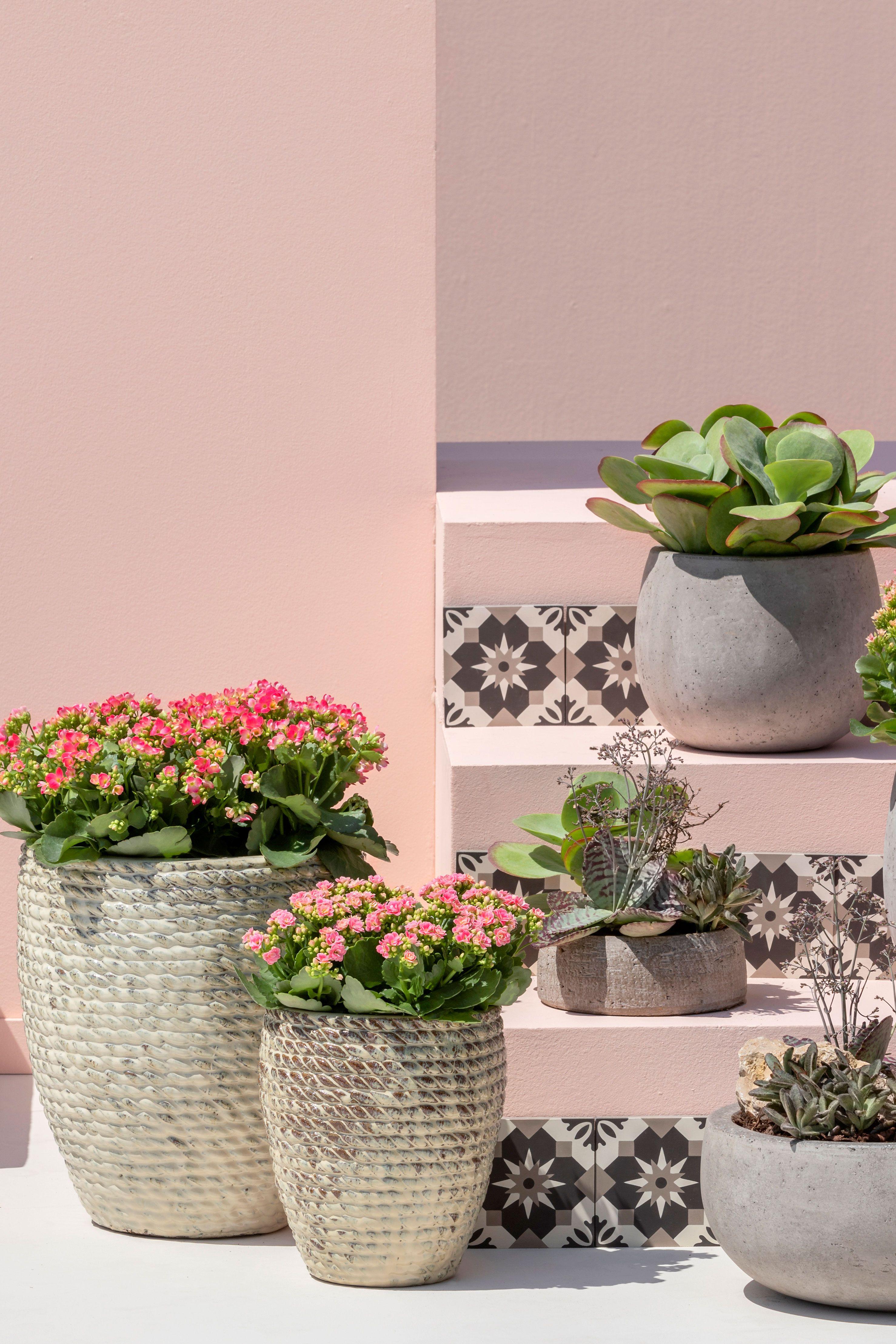 Kalanchoen Pflanzen Dauerbluher Zimmerpflanzen