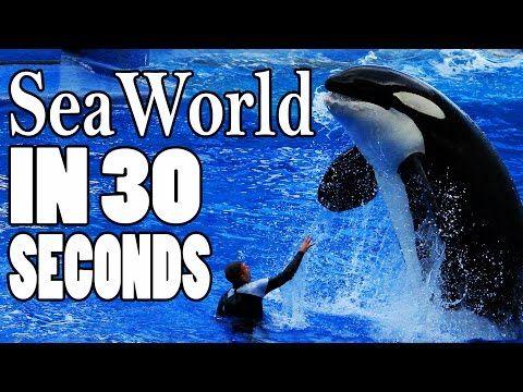 Seaworld In 30 Seconds Flat Sea World Animal Welfare Animal Abuse