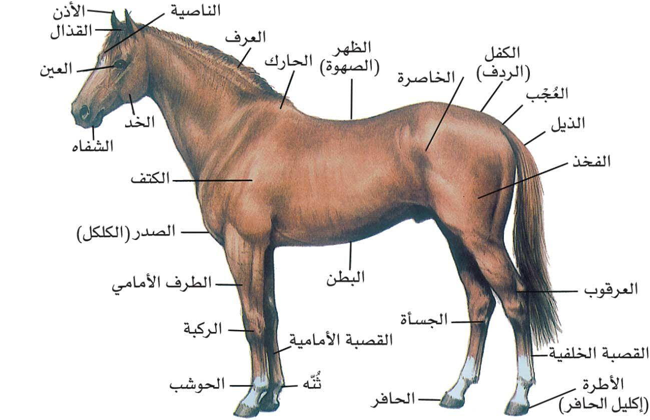 ط طظ ظ ظ ط C ط ط طھظ ظƒط ط ظپظٹظ ط C ظ ط ط ظ ظ ط ظ طظٹظ ظ ظˆط ظ ط طھ ط ظ ط ط ظٹظ ظ ط C ط ظ ظ ظˆط ط ظٹط ط ظ ظ طھظ ظٹط Arabic Horse Horses Stallion Horses