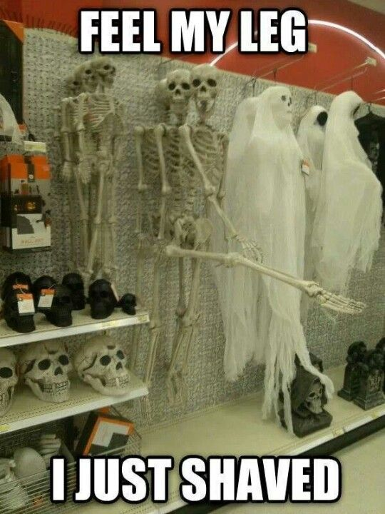 Skeleton Meme Funny Pictures Funny Jokes Really Funny