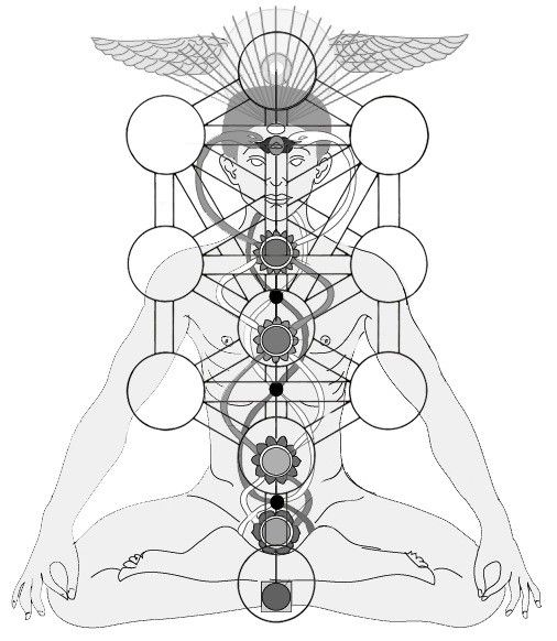 Kundalini Serpent Caduceus Chakras Ida Pingala Chart Tree Of Life Tree Of Life Tattoo Tree Of Life Tree Of Life Art The tree of life first appears in the bible in the story of adam and eve when they were in the garden of eden. kundalini serpent caduceus chakras ida