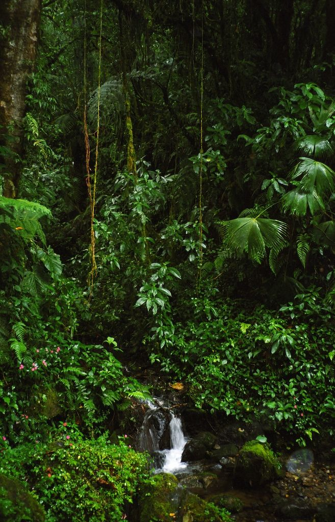 Panama -  I imagine this would be what Eden looks like...