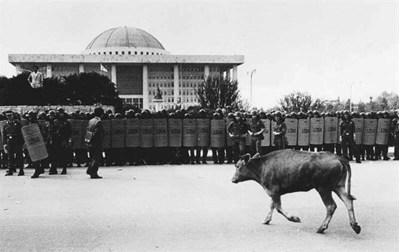 88년 쇠고기수입반대시위