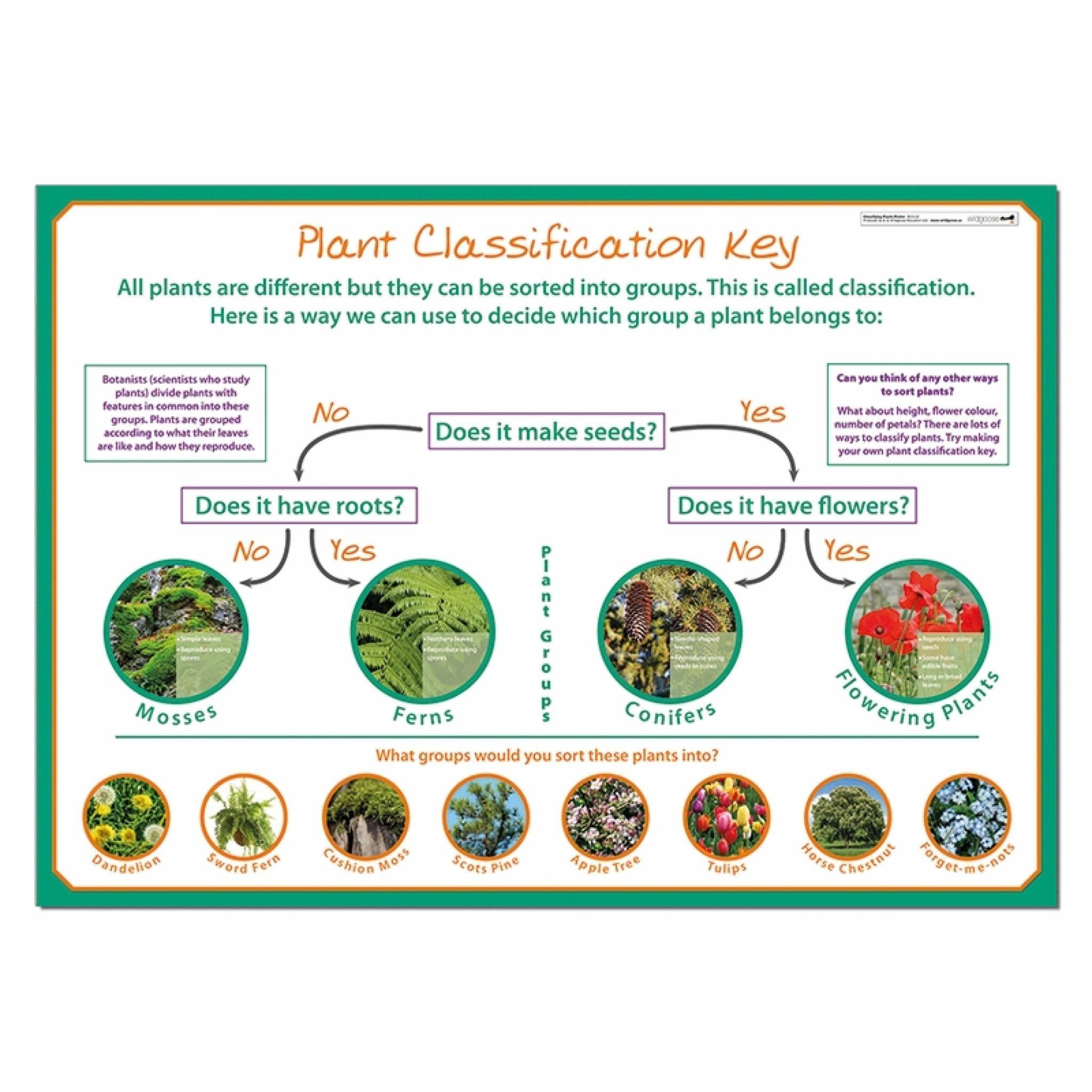 Plants Poster Classifying Plants Plant Classification Plant Study [ 2048 x 2048 Pixel ]