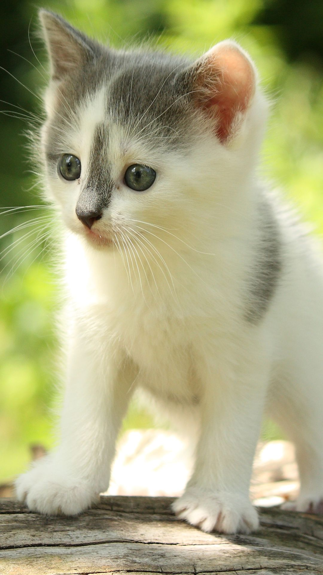 Animal Cat 1080x1920 Mobile Wallpaper Cats Baby Cats Kittens Cutest