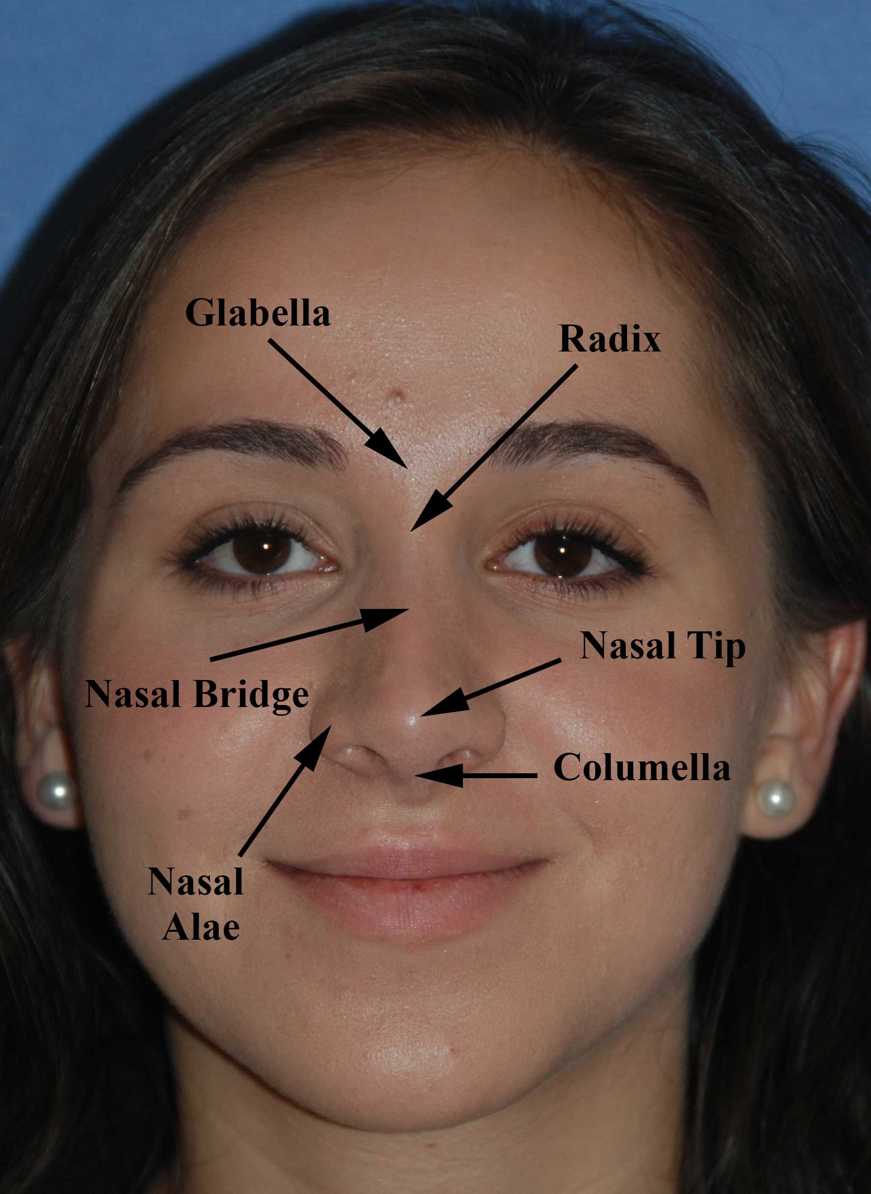 Anatomical Parts Of Nose Google Search Gesigte En Figure
