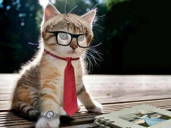 Office Cat Animals And Pets Cats Cute Cats Und Kittens