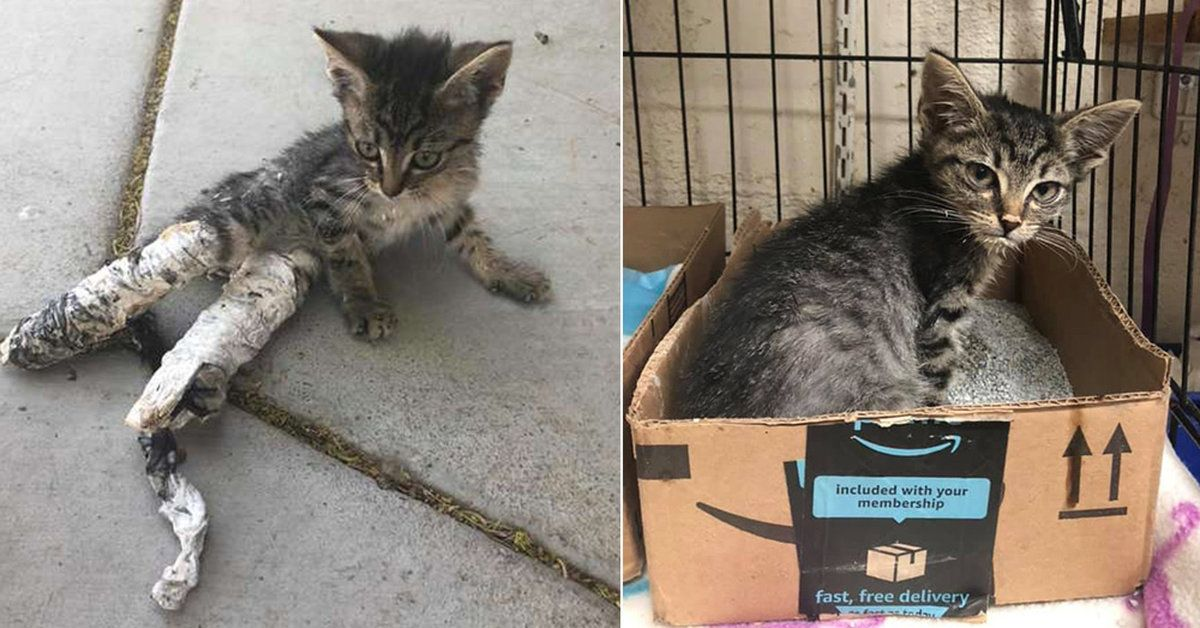 Children Find Kitten Wrapped In Crude Casts Look How She S Flourishing Now Kittens 6 Week Old Kitten Kitty