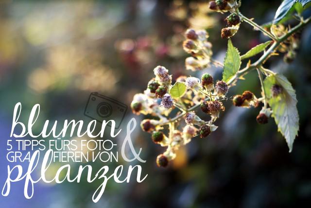 Tipps Zum Fotografieren Von Blumen Und Pflanzen | Fotografie Tipps ... Fruhlingsblumen Pflanzen Tipps