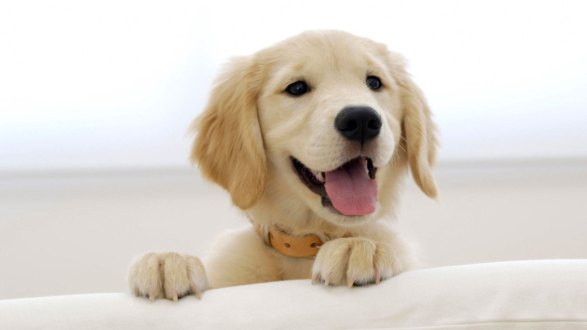 Auntconnie Cute Puppies Puppy Backgrounds Cute Dogs